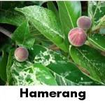hamerang