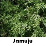 jamuju