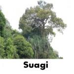 suagi